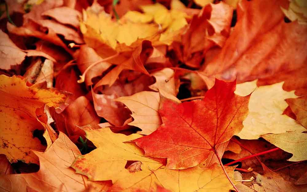 Paysage d'automne canada québec